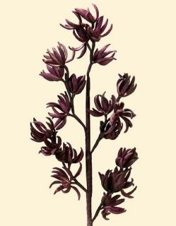 Gilde Deko Dendrobium-Orchidee 21 Bl. 42634