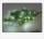 Formano Lichterkette 250 cm mit 50 LED Lichtern 633255