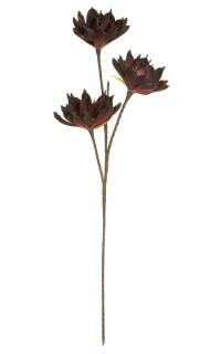 Gilde Echeveria mit 3 Blüten burgund Breite 15,0 cm Höhe 85,0 cm Durchm. 30,0 cm 42655