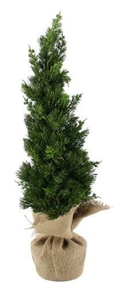 Kaheku Dekobaum Tuja grün 62h 1202000187