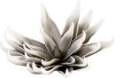 Casablanca Foam Flower,weiß/grau,L.32cm D.ca25cm...