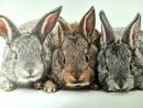 Mars&More tischset kaninchen (4) SCPMKN